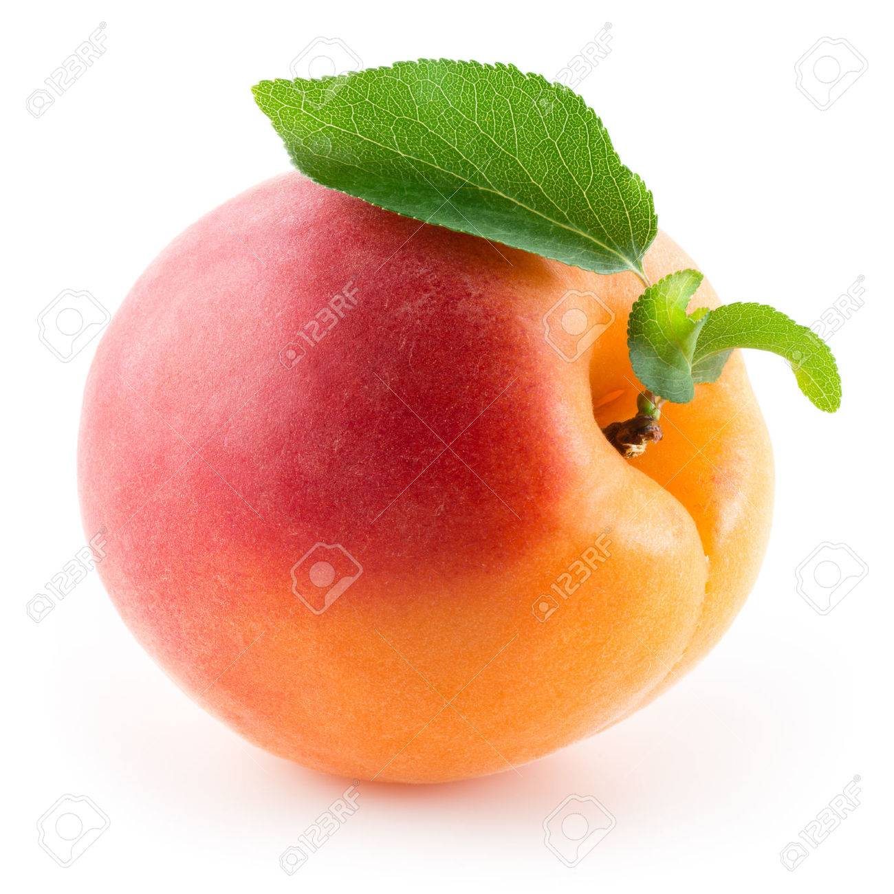Apricot. Fruit with leaf on a white background. - 54475462
