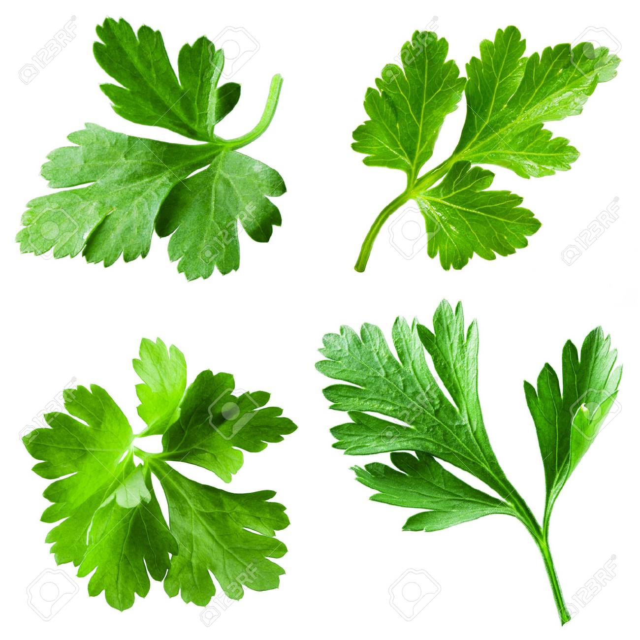 Parsley isolated on white background. Collection - 57052204
