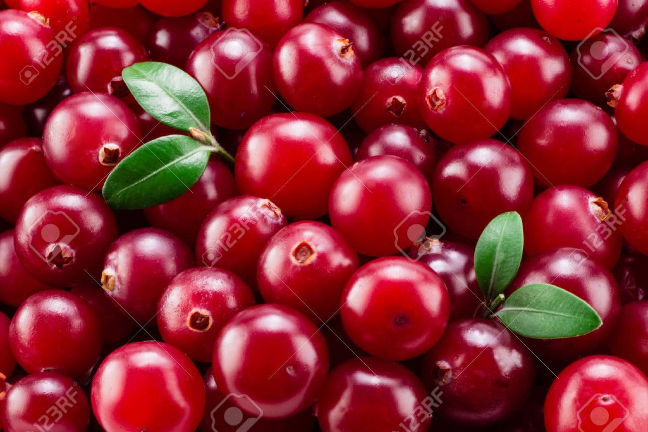 Cranberry with leaves macro. Background. - 59196951