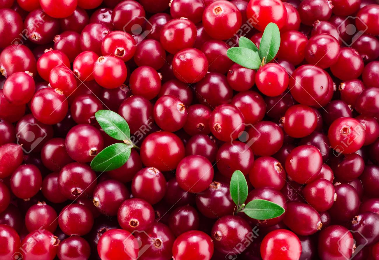 Fresh ripe cranberry in water. Red berries with drops. Food back - 69126460