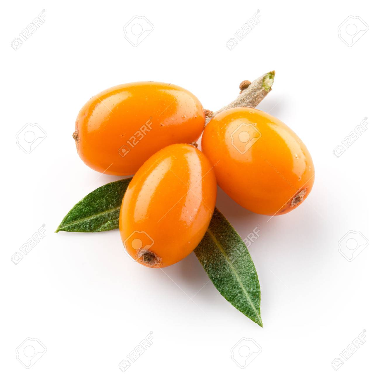 Sea buckthorn isolated on the white. With clipping path. - 71253722