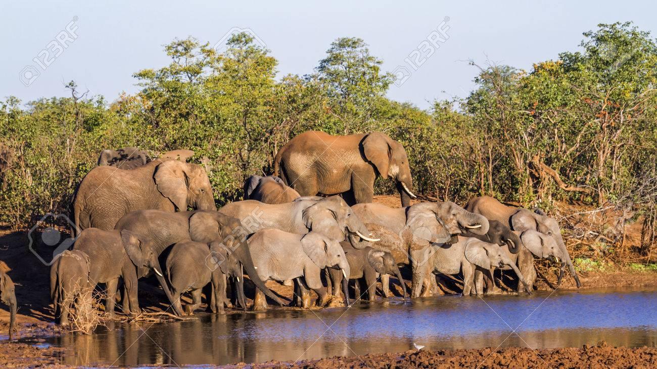 Kruger National Park in Africa 47