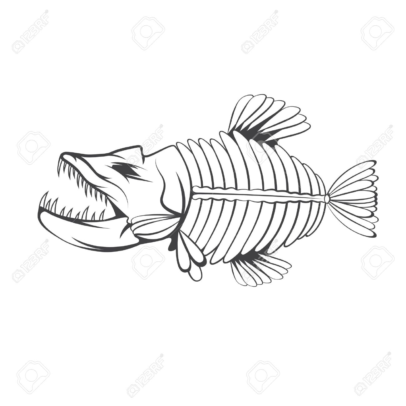 Vector Design Template Of Aggressive Tropical Fish Skeleton Royalty
