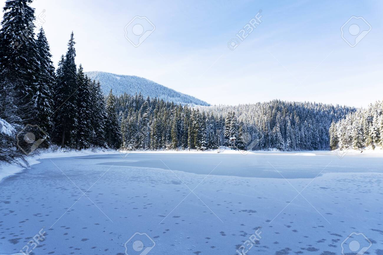 View at the lake Sinevir at winter sunny calm day, view at snowy forest and frozen lake, clear sky, no clouds. Concept of relax and unity with nature. Good for banners. - 138107340
