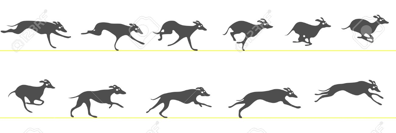 greyhound dog running
