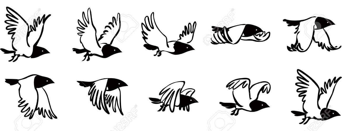 Flying Bird Sequence Royalty Free Cliparts, Vectors, And Stock ...