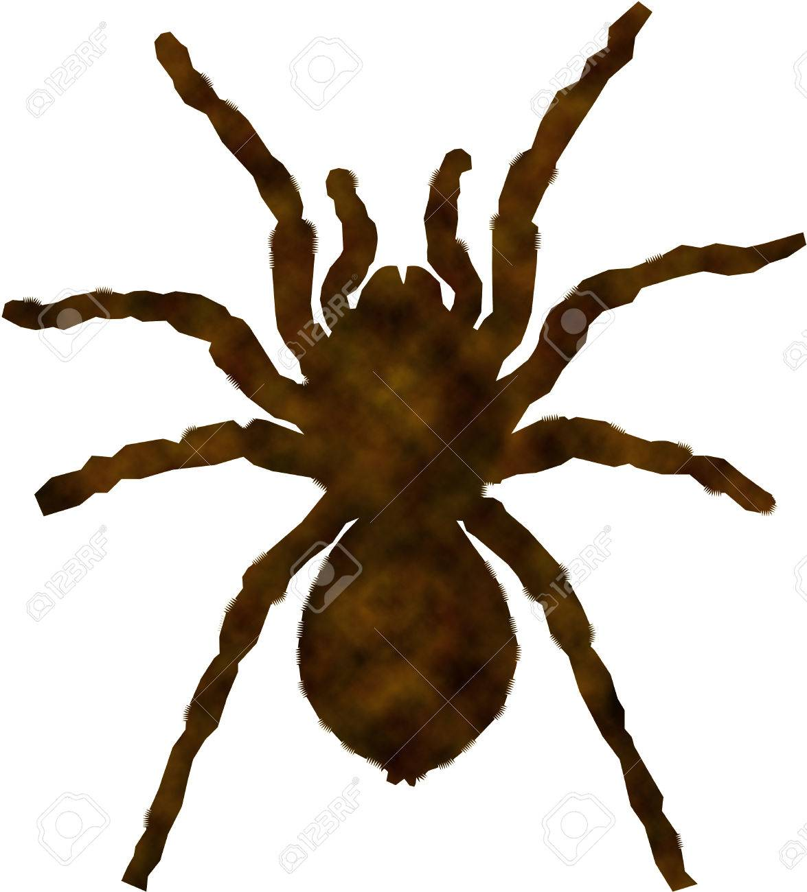 Tarantula Stock Photo - 22698423