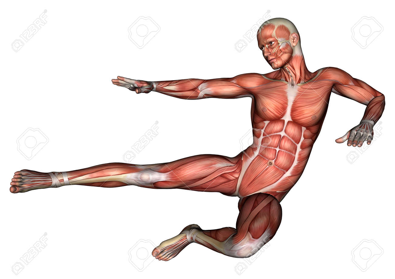 3d Digital Render Of A Male Anatomy Figure With Muscles Map Isolated