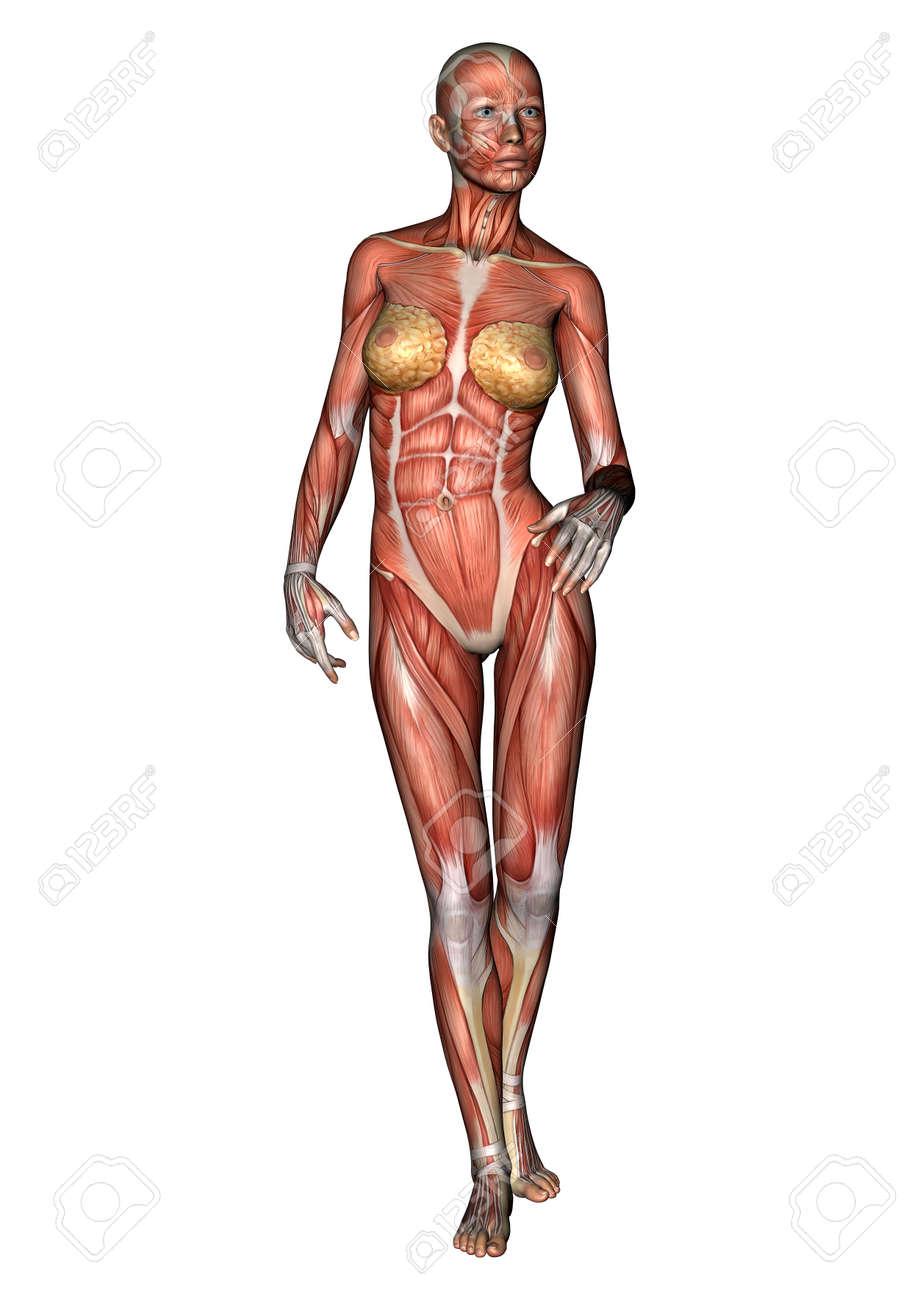Tolle Menschliche Weibliche Anatomie Bilder Fotos - Anatomie Von ...