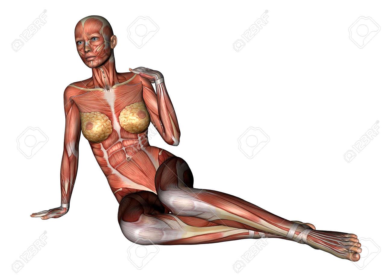 Digital 3D Render De Una Figura De La Anatomía Femenina Sentada Con ...
