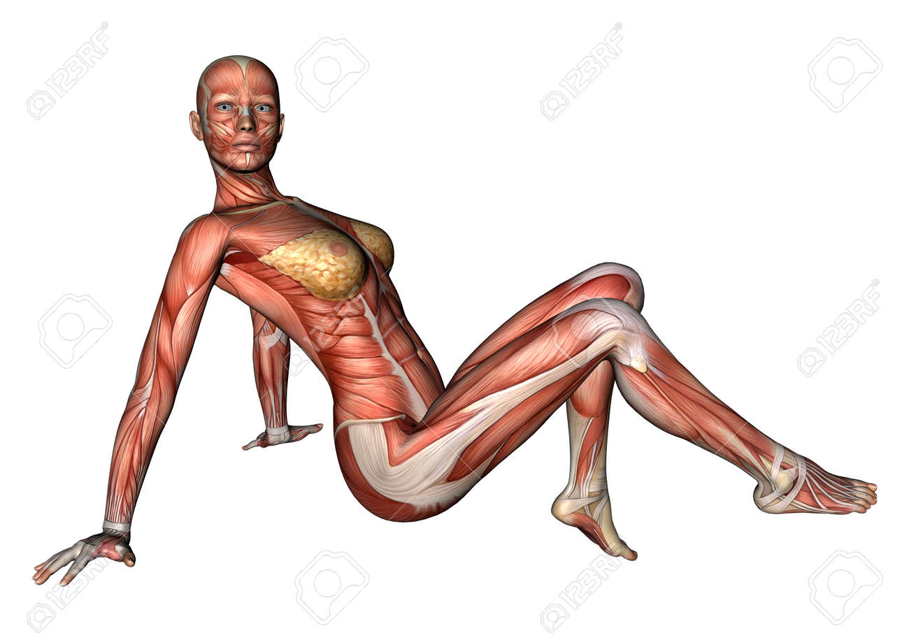 3d Digital Render Of A Sitting Female Anatomy Figure With Muscles