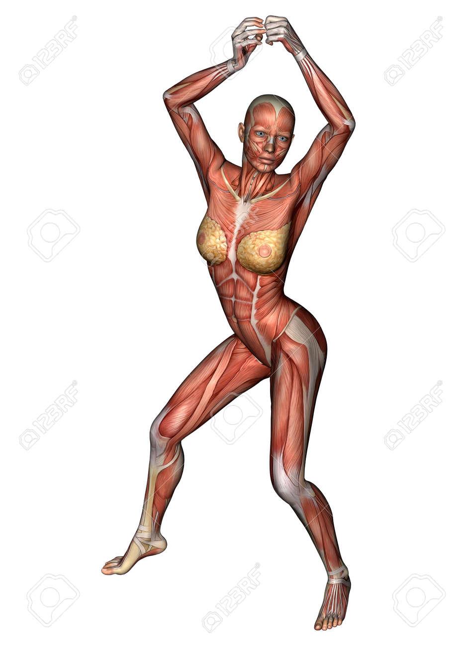 Großartig Weibliche Anatomie Figur Bilder - Physiologie Von ...