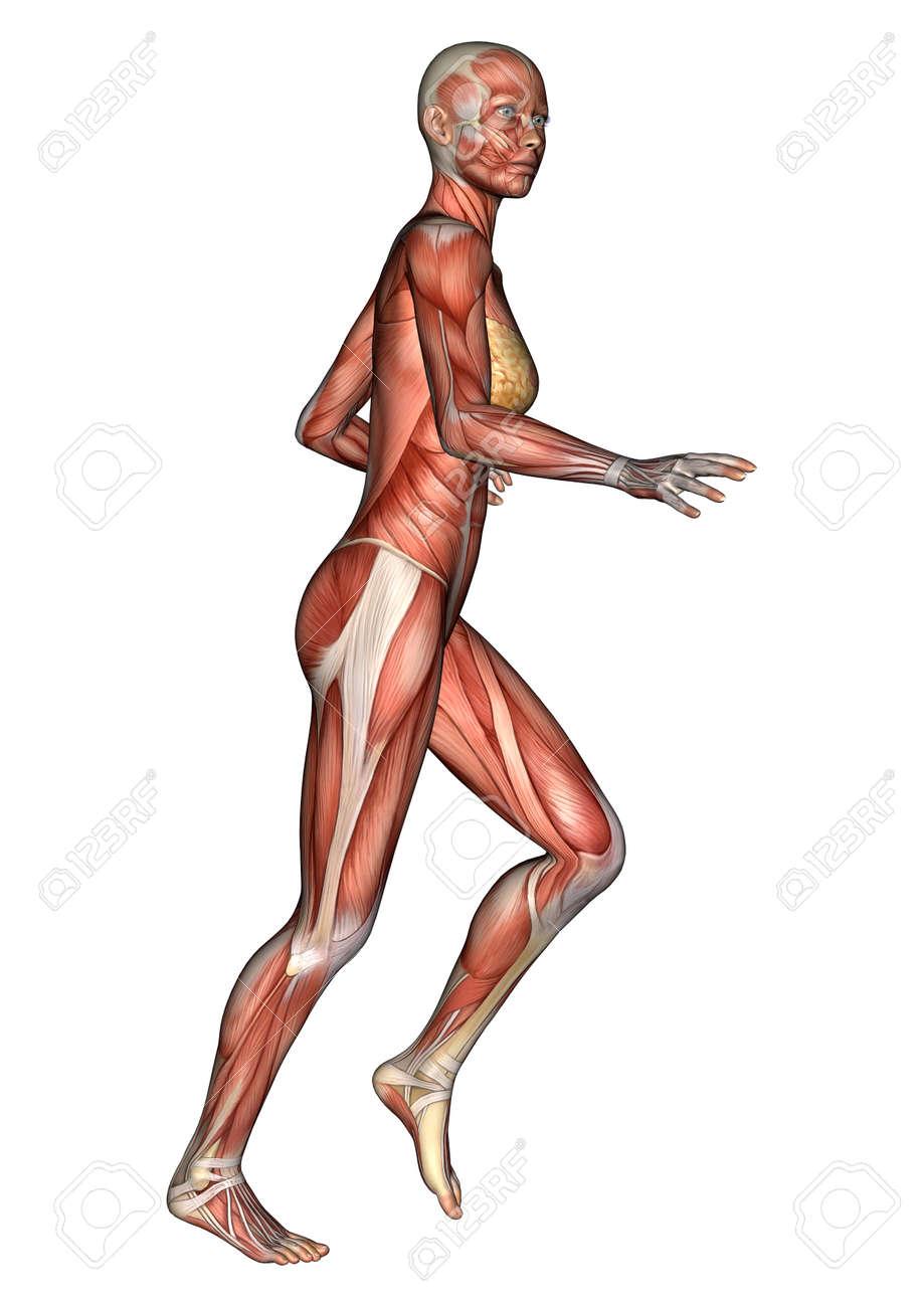 Digital 3D Render De Una Figura De La Anatomía Femenina Que Se ...