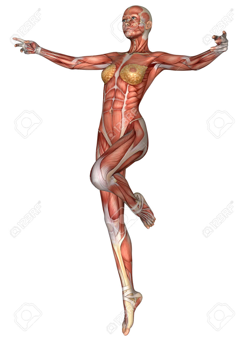 3d Digital Render Of An Exercising Female Anatomy Figure With