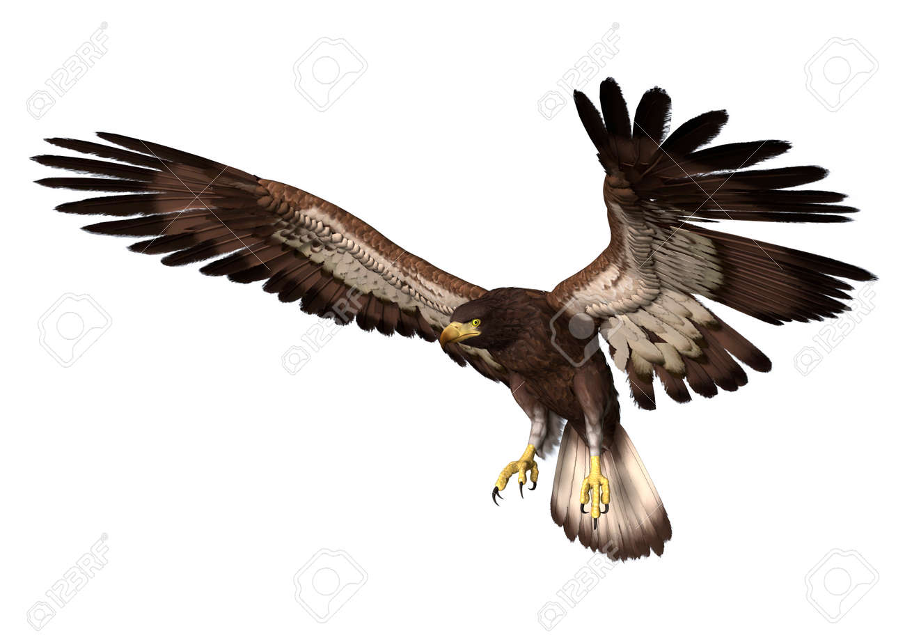 eagle landing stock photos royalty free eagle landing images and