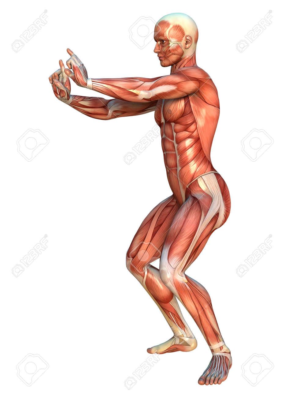 3D Digital Hacen De Una Figura Humana Con Mapas Musculares En Una ...