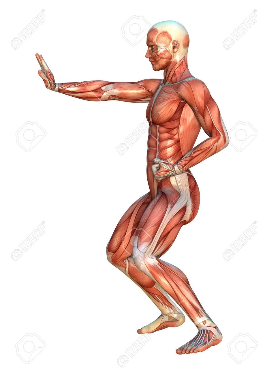 Gemütlich Menschlicher Muskel Karte Fotos - Menschliche Anatomie ...