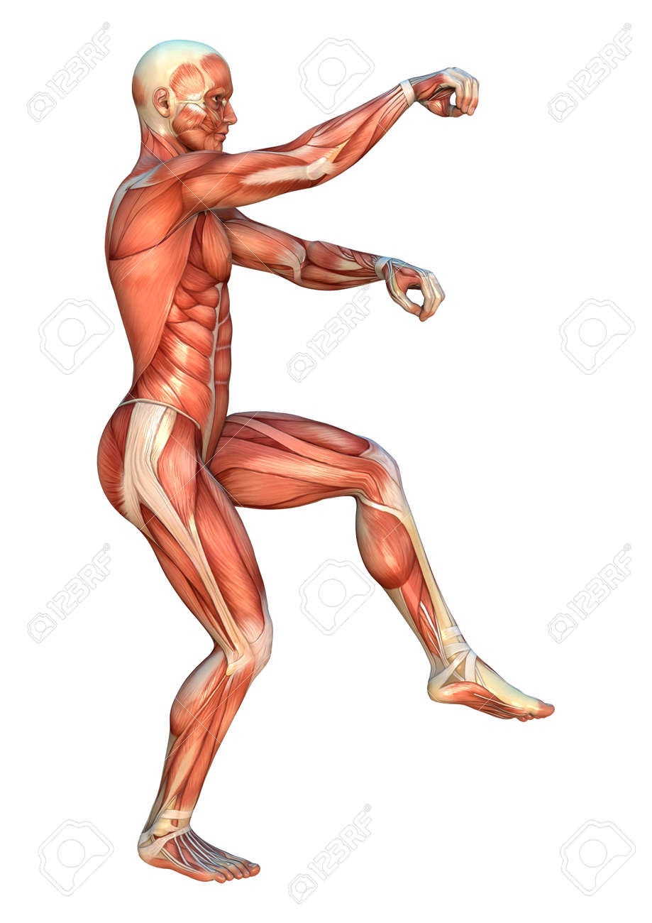 3D Digital Render Of A Human Figure With Muscle Maps In A Praying ...