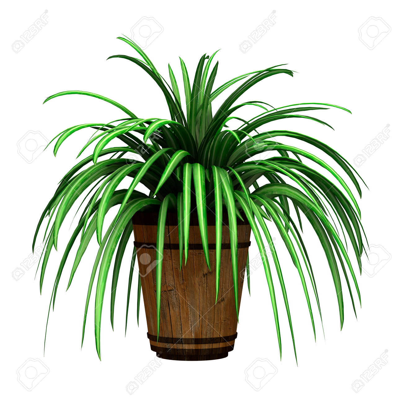 753 spider plant cliparts stock vector and royalty free spider