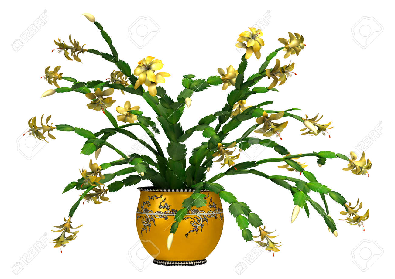 3D Digital Render Of A Christmas Cactus In A Flower Pot Isolated ...