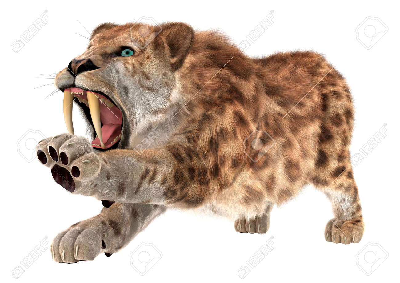 115 saber tooth tiger cliparts stock vector and royalty free
