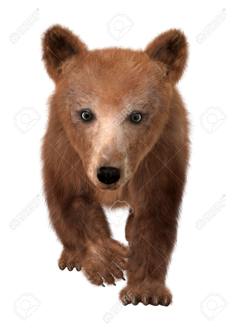 5f75c9fc31b 3D digital render of a cute little brown bear isolated on white background  Stock Photo -