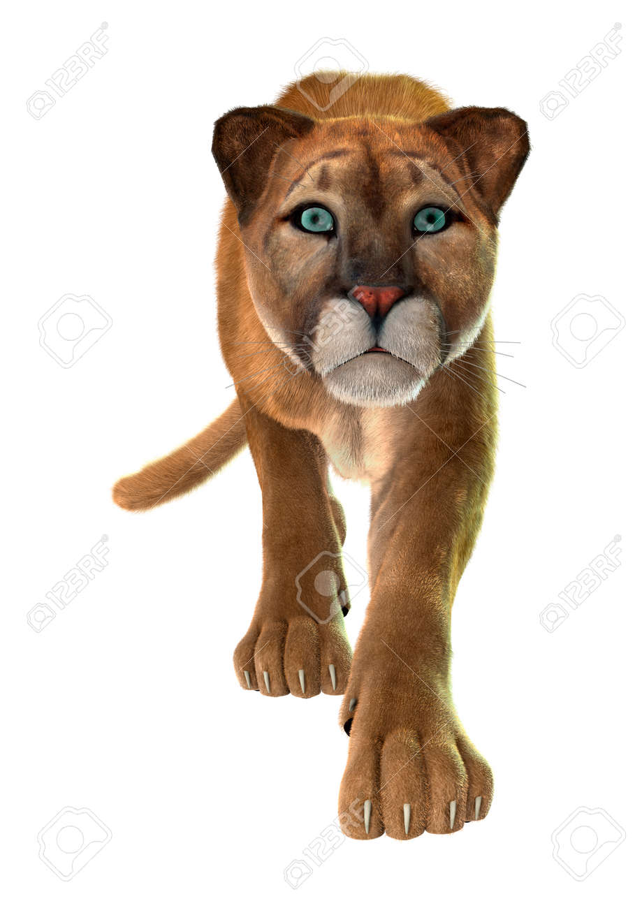 8b2bf7d1253c 3D digital render of a big cat puma hunting isolated on white background  Stock Photo -