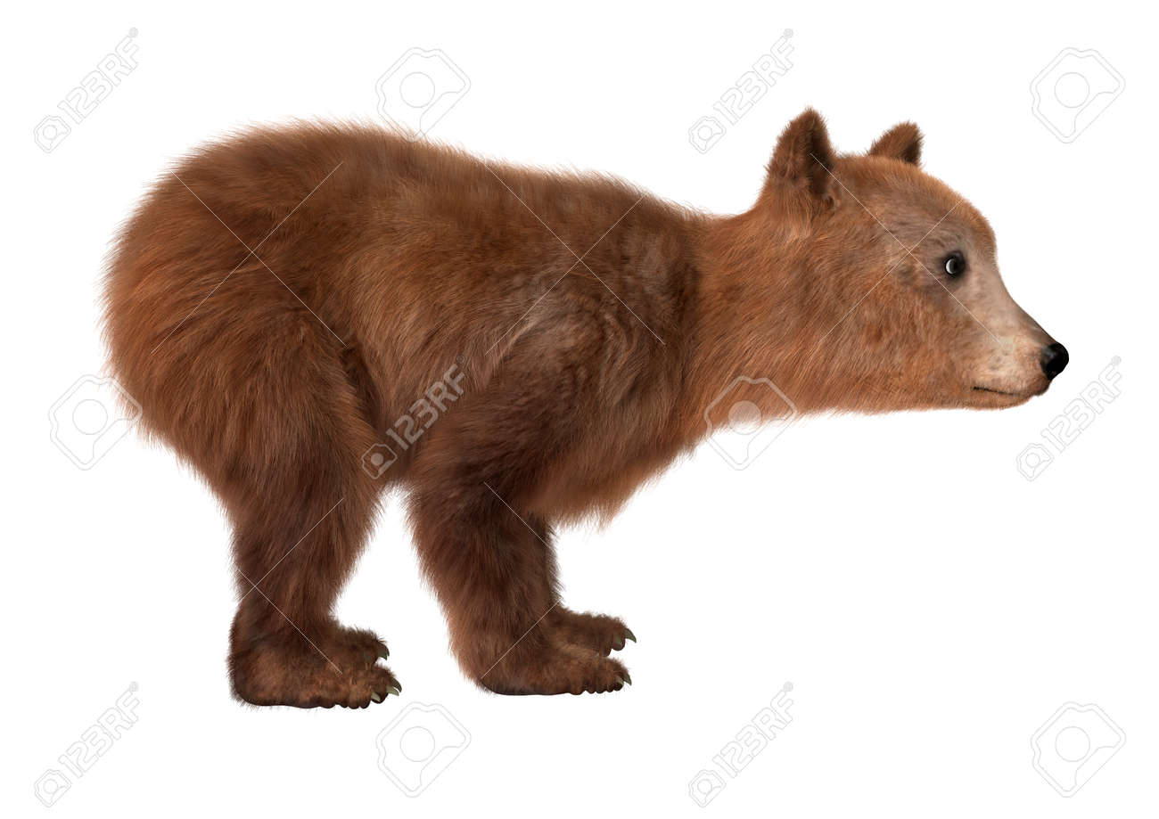 20b5b59a40c 3D digital render of a brown bear cub isolated on white background Stock  Photo - 45780296