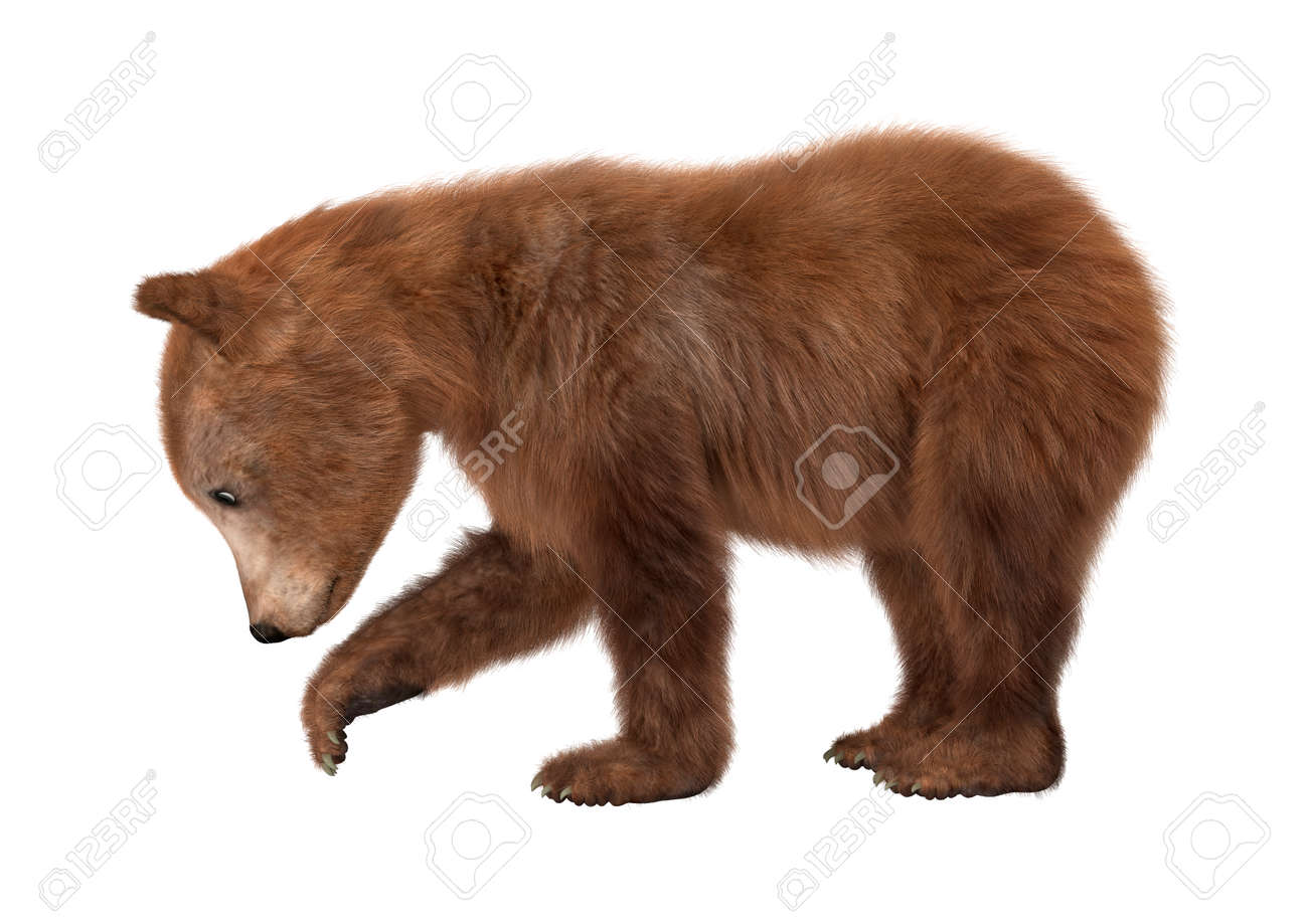 a453308cd10 3D digital render of a brown bear cub isolated on white background Stock  Photo - 45780301