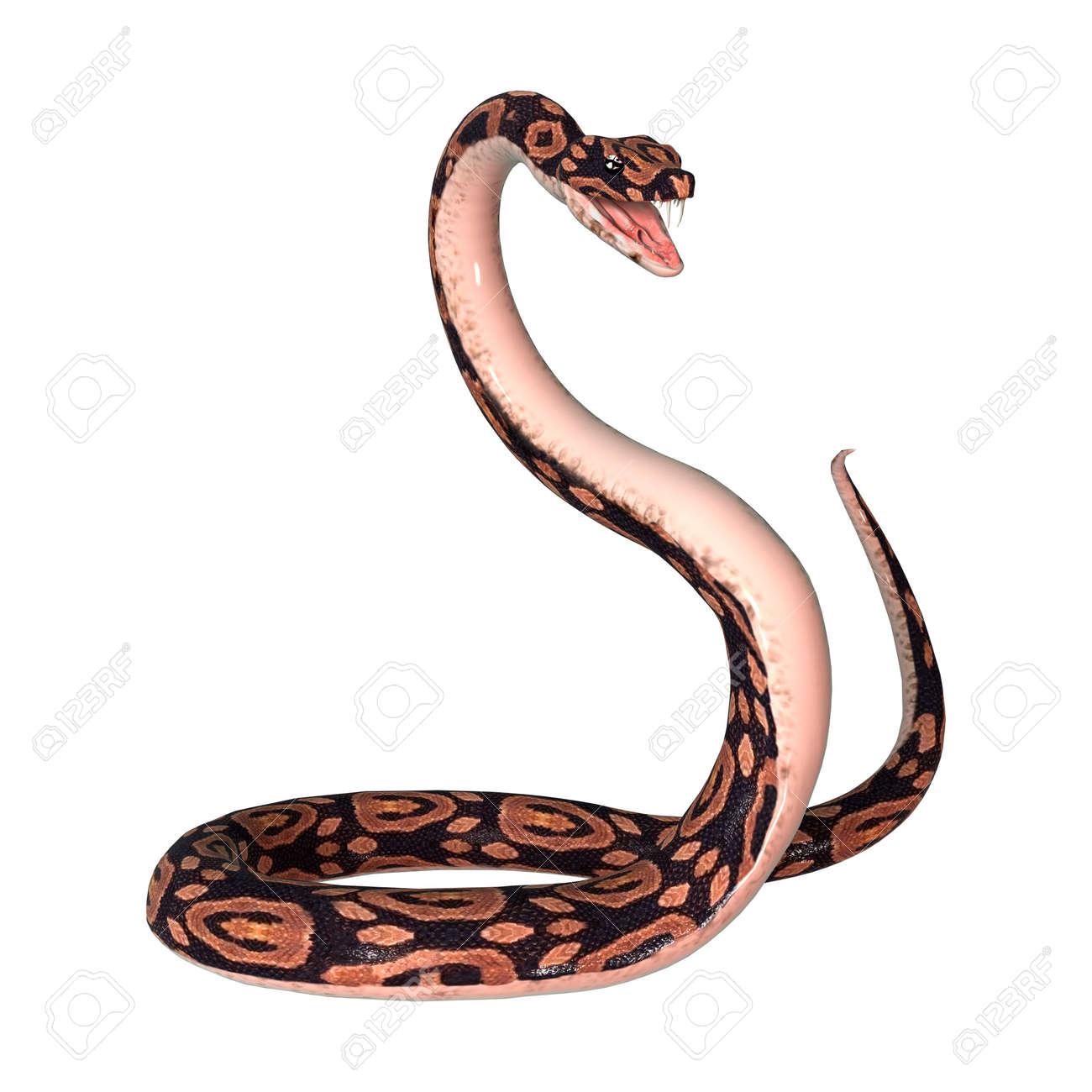 Digital 3D Render De Una Serpiente Pitón De La Bola Aislado En El ...