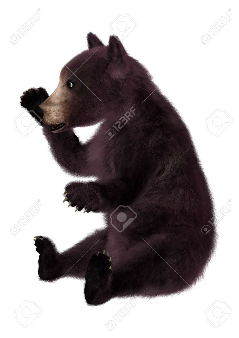 575be300c3e 3D digital render of a black bear cub isolated on white background Stock  Photo - 50538117