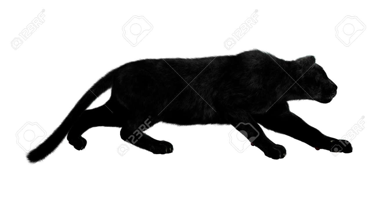 La Grande Panthère Noire render numérique d'une grande chasse panthère noire isolé sur fond