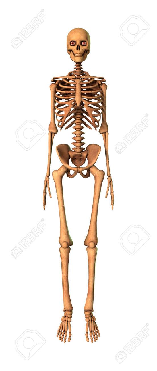 3D-Rendering Eines Menschlichen Skeletts Isoliert Auf Weißem ...
