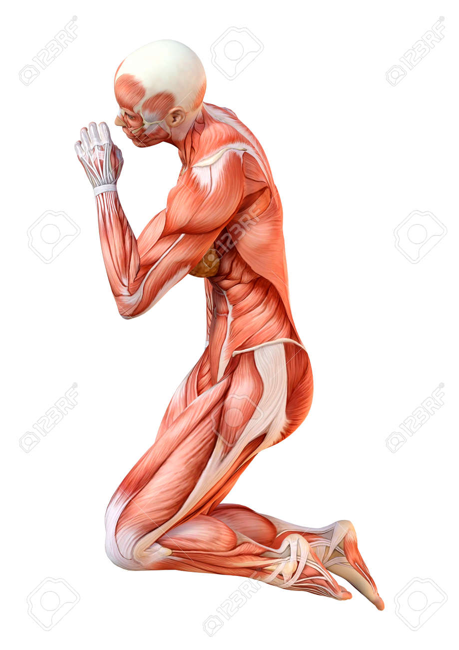 3D rendering of a female figure with muscle maps isolated on white background - 124587582