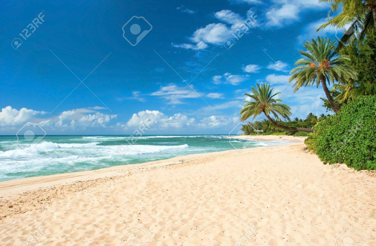 Untouched sandy beach with palms trees and azure ocean in background - 20915102