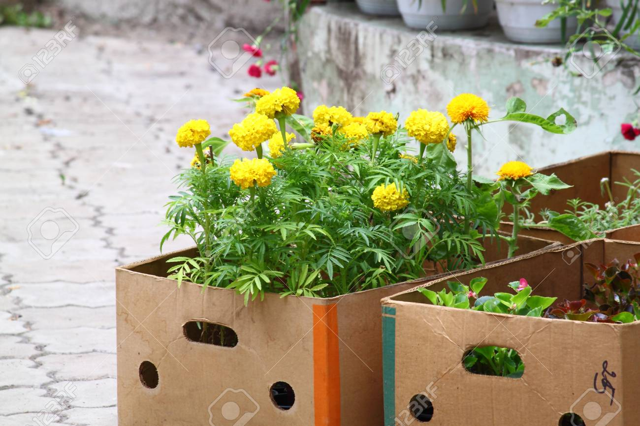 Flowers In The Containers For Sale Stock Photo Picture And Royalty