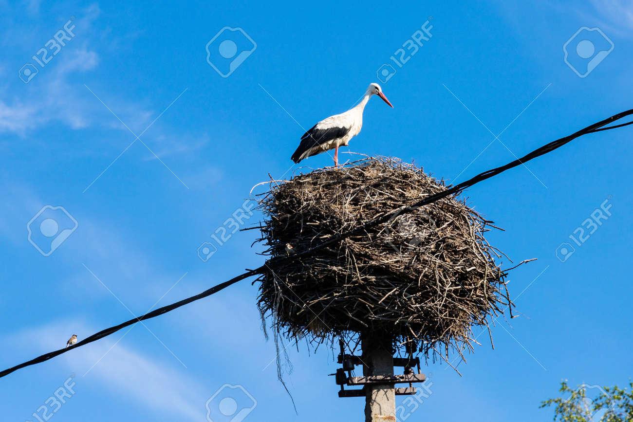 Stork in its nest in the summer months. Stork's nest. - 152088120