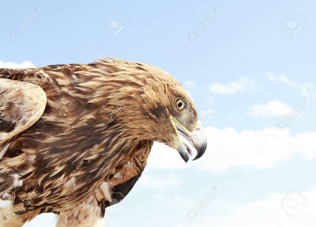 Eagle head on blue sky background  Close up Stock Photo - 14205158
