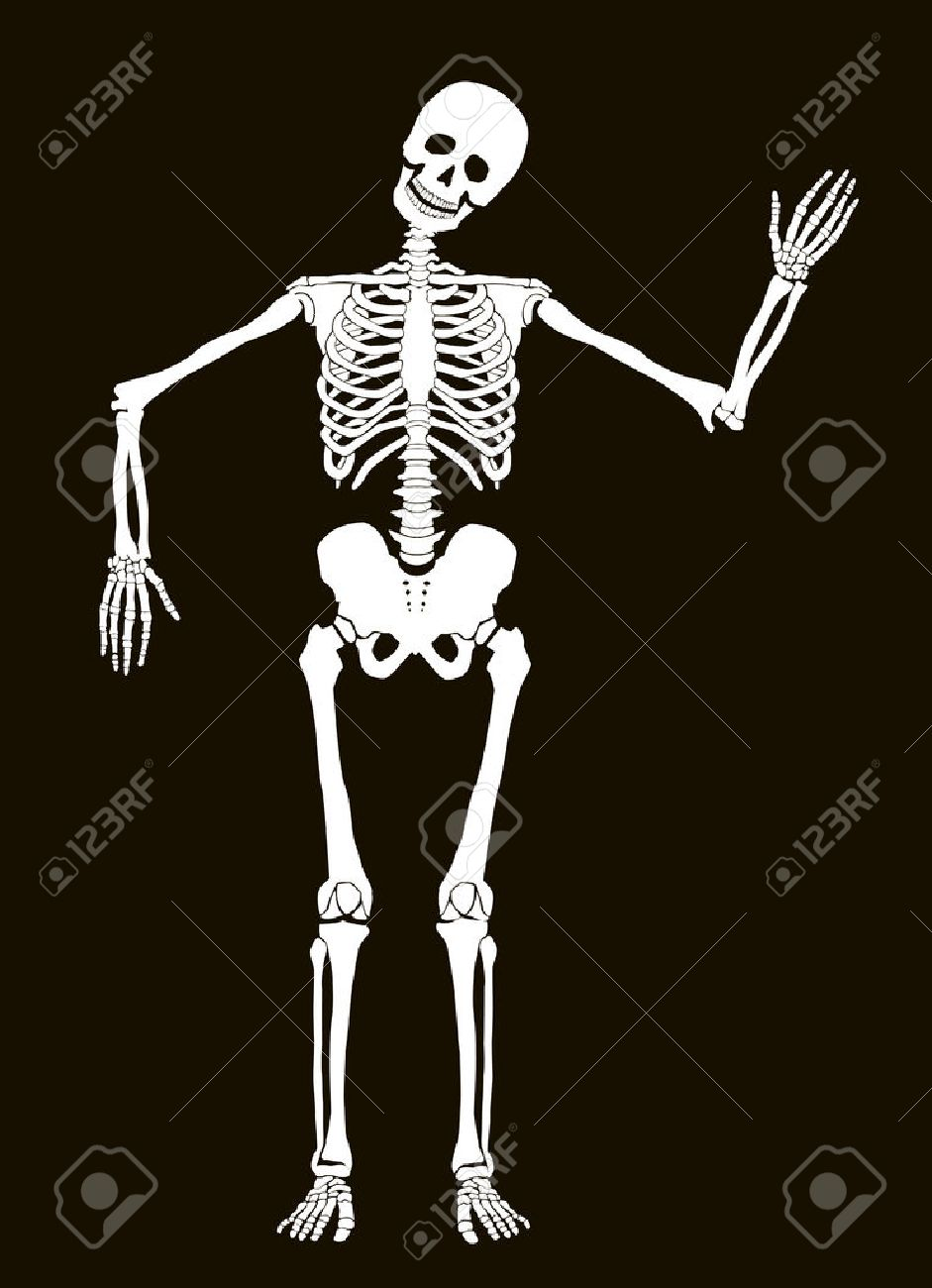 Funny vector skeleton isolated over black. Halloween design Stock Vector - 24201730