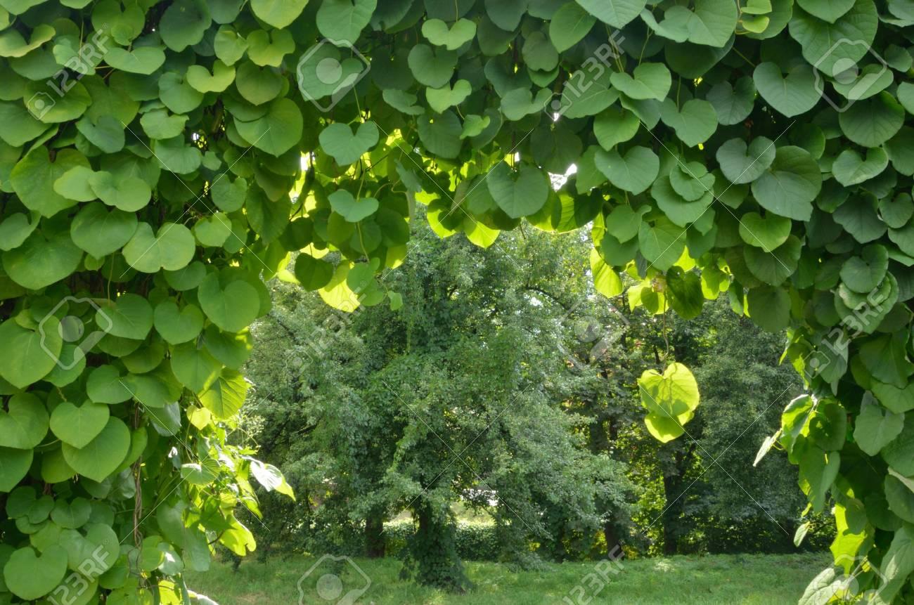 Grün Torbogen In Einem Garten Lizenzfreie Fotos Bilder Und Stock