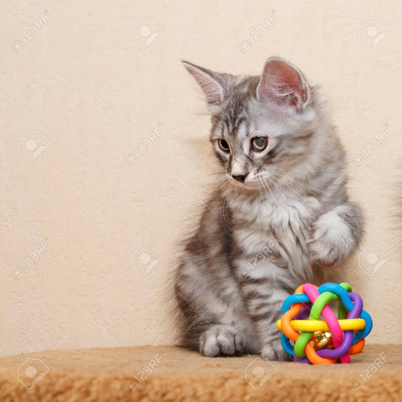 A Cute Little Kitten Is A Bobtail And A Toy Pets Hypoallergenic