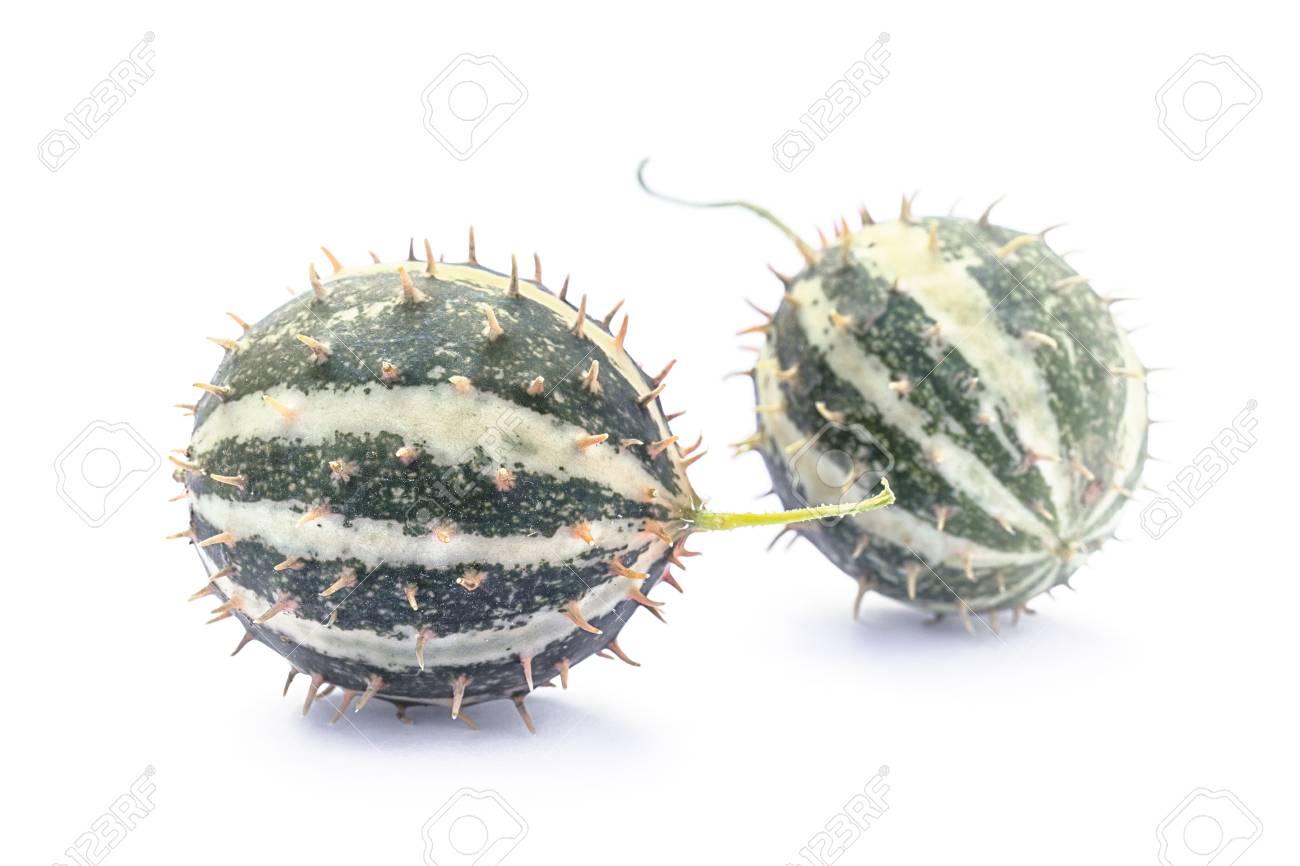 Paddy melon (Cucumis myriocarpus), wild spiny cucumber, exotic ornamental vegetable - 121975895