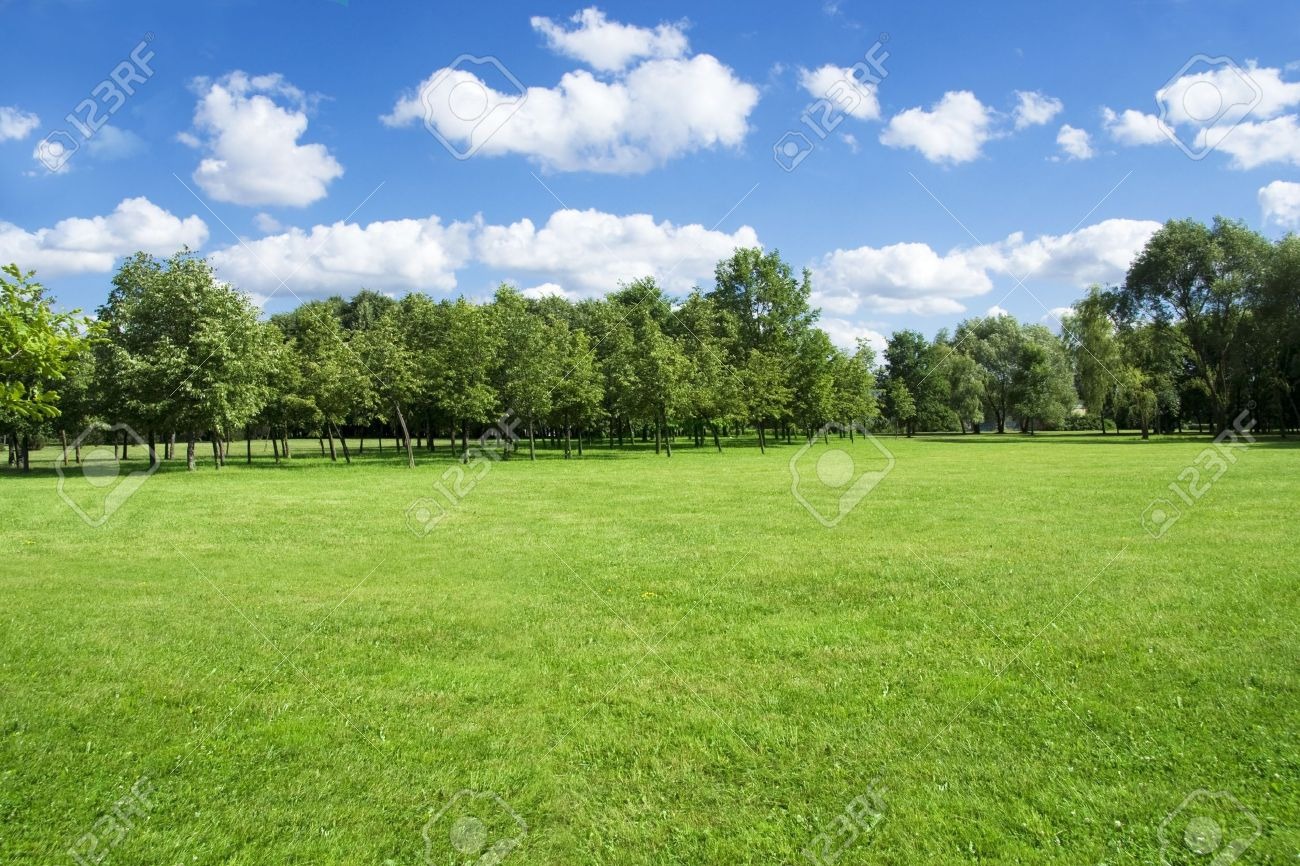 Grass Landscape Summer landscape of grass and trees stock photo picture and royalty stock photo summer landscape of grass and trees workwithnaturefo