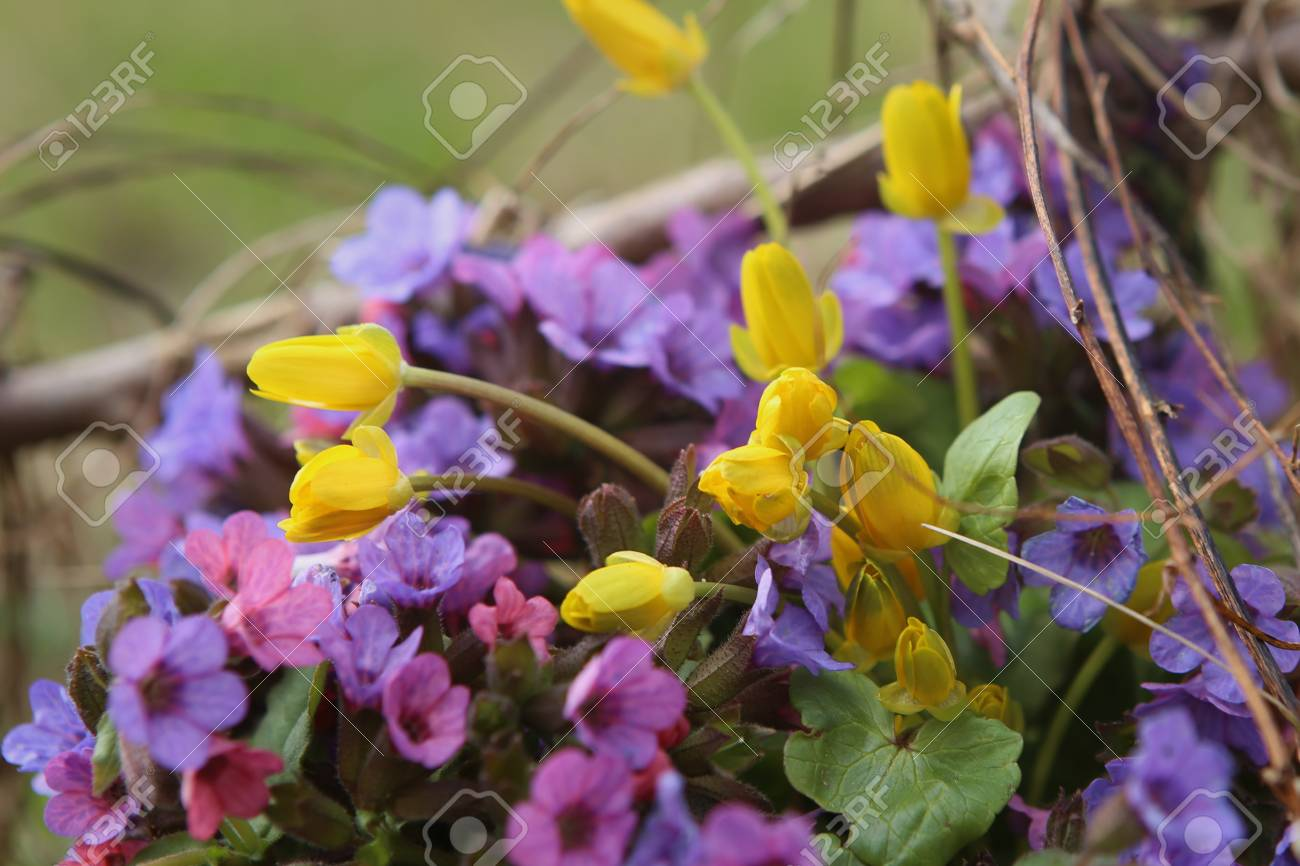Wild Forest Flowers In Spring Small Blue An Yellow Wildflowers