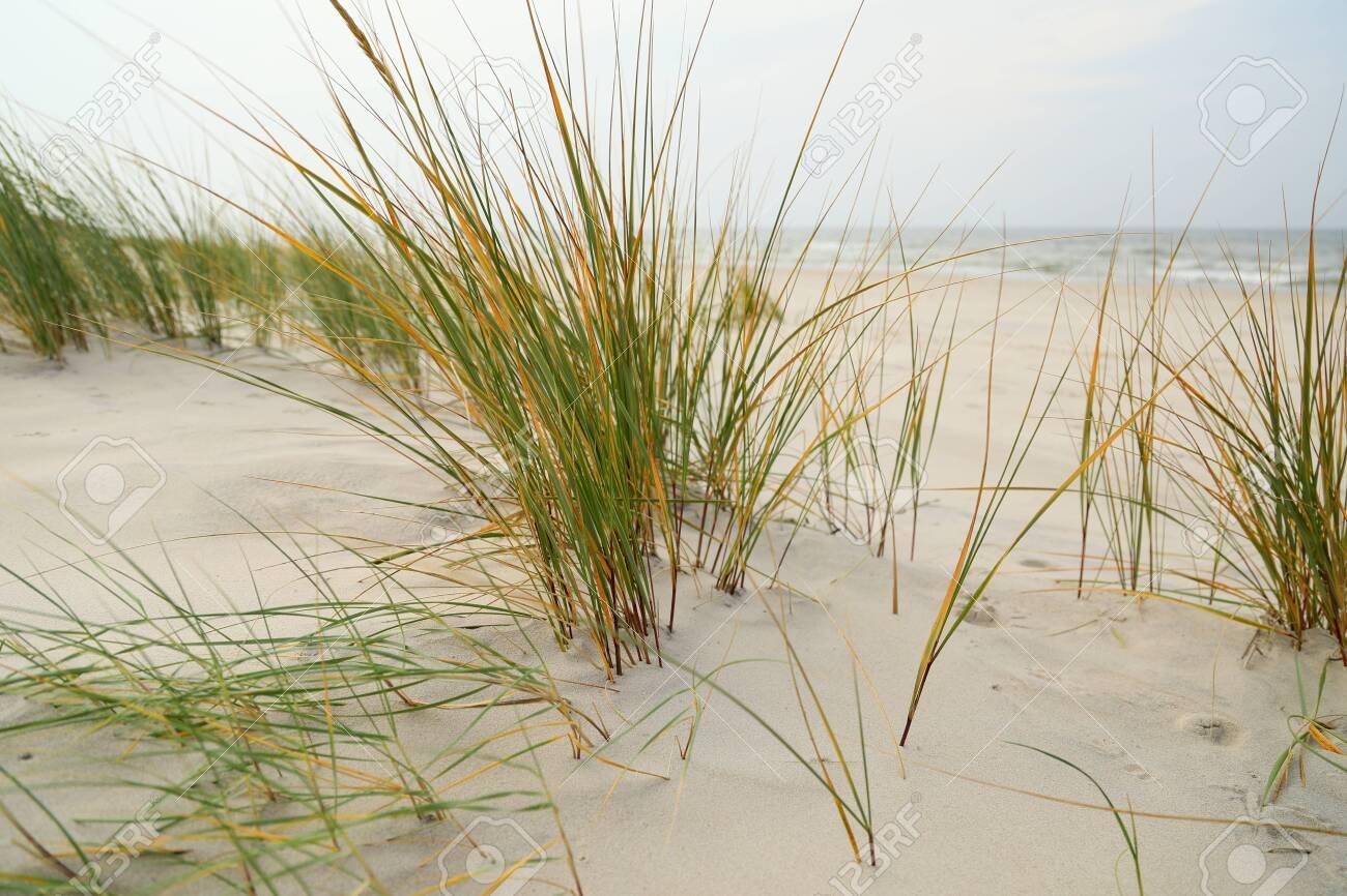 Dune grasses on the beach - 119769315