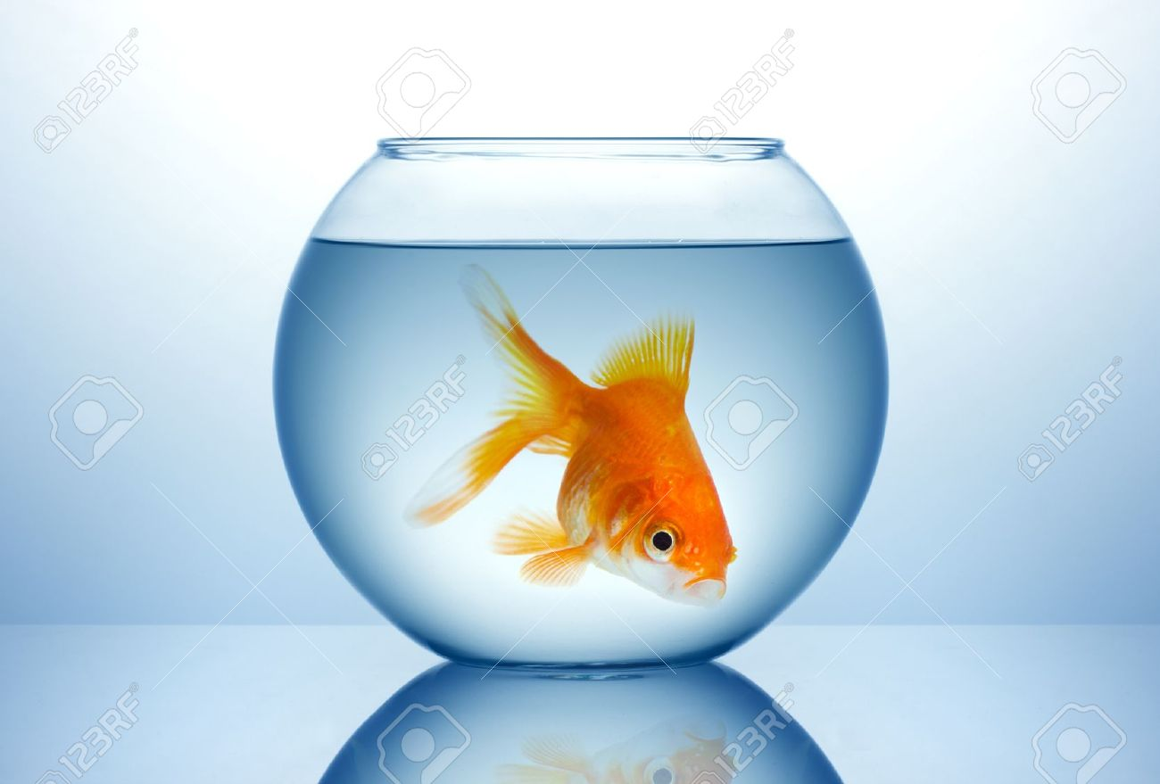 Freshwater fish bowl - Fishbowl Fish Bowl With Gold Fish In Blue Water