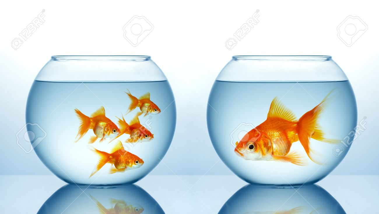 two fishbowls with gild fishes stock photo picture and royalty