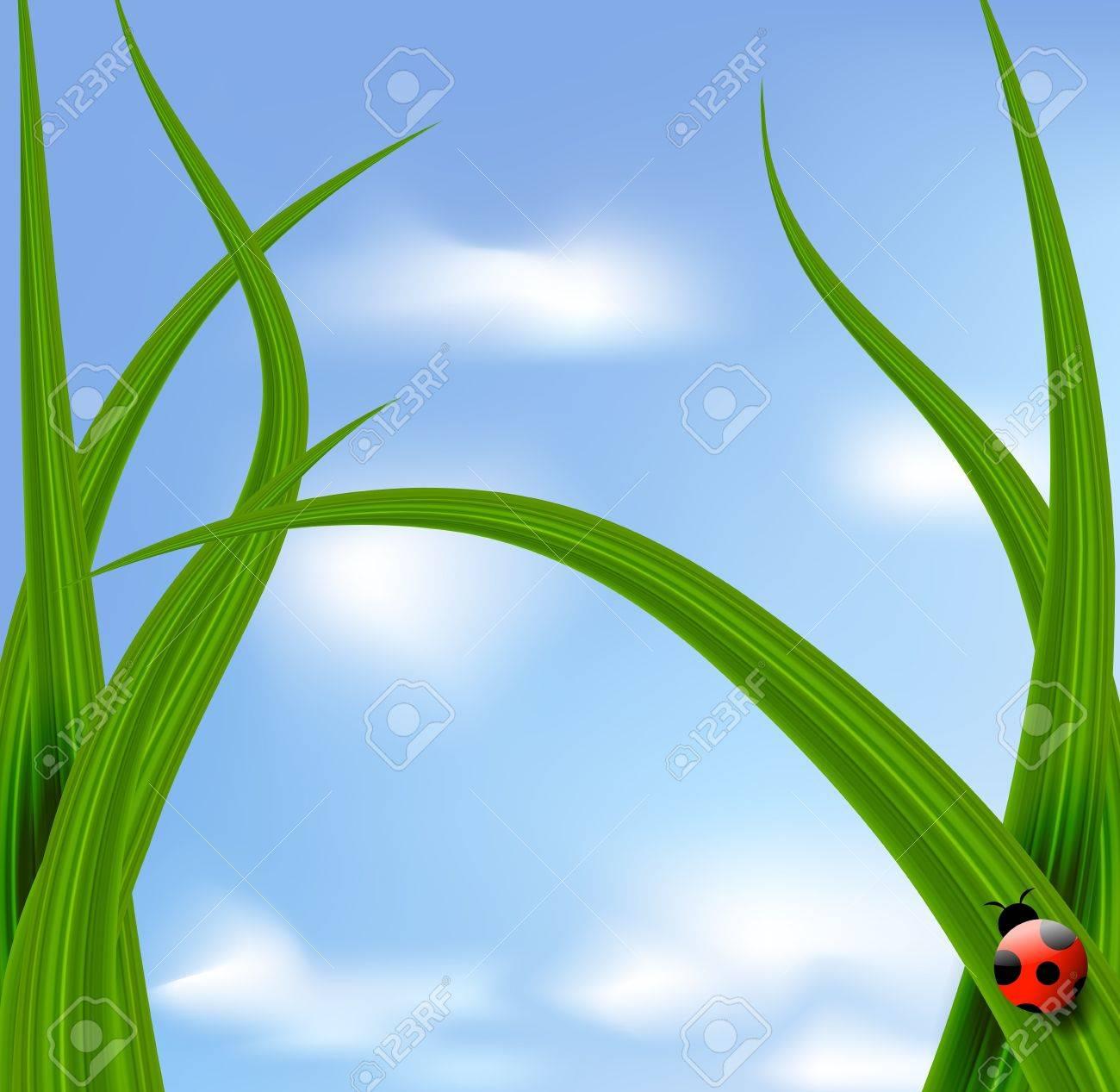 Vector grass against blue sky and ladybird Stock Vector - 12711420