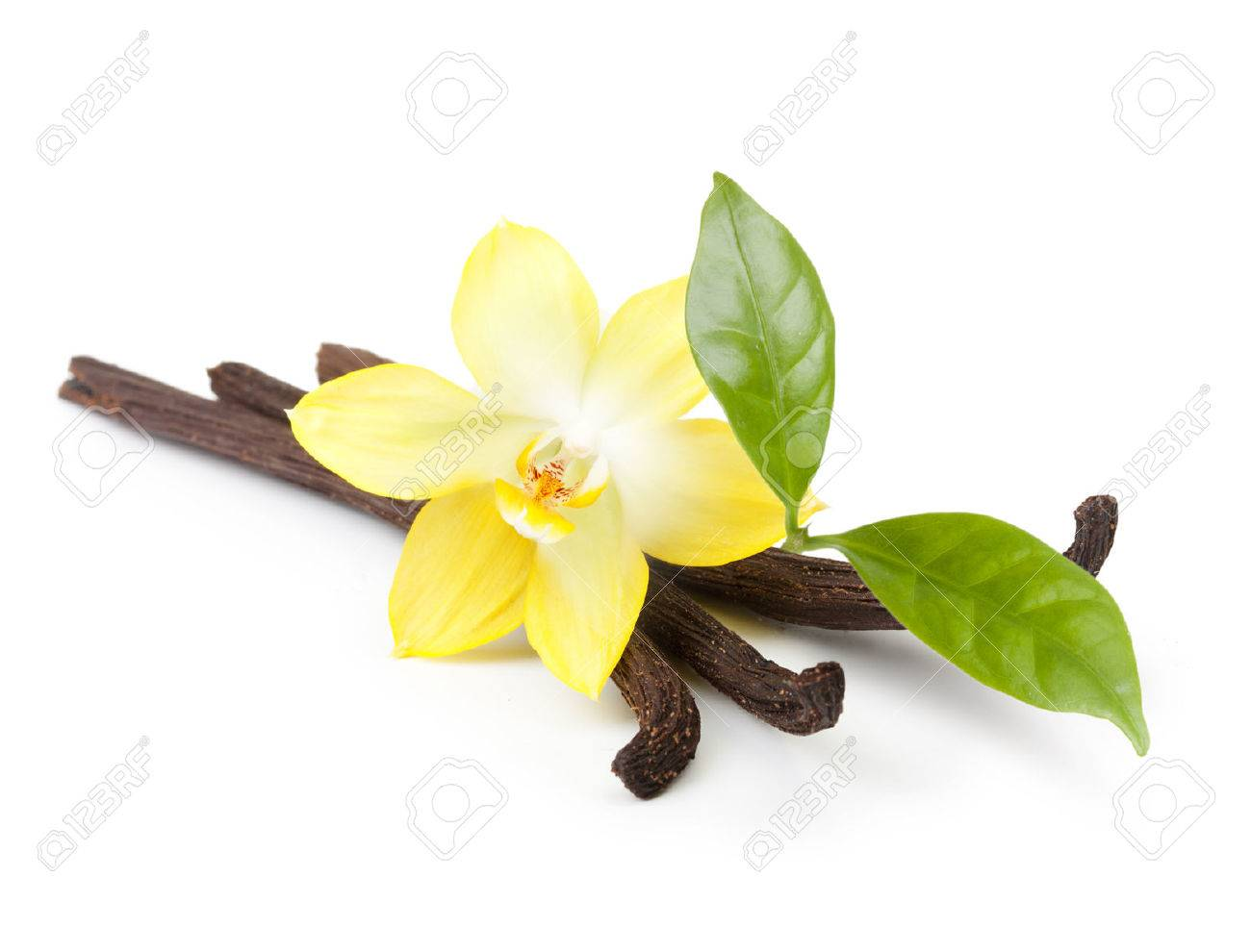 Vanilla pods and orchid flower isolated on white background - 27040289