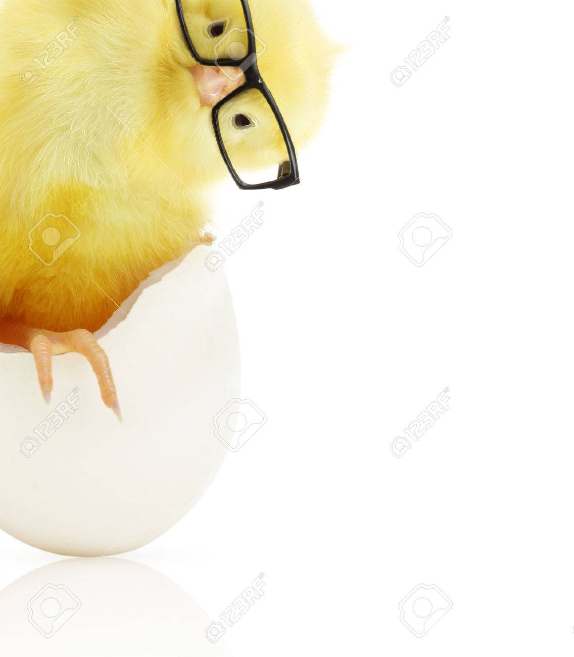 Cute little chicken in black eye glasses coming out of a white egg isolated on white background - 32040303